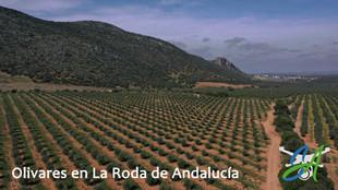 Olivares en La Roda.jpg