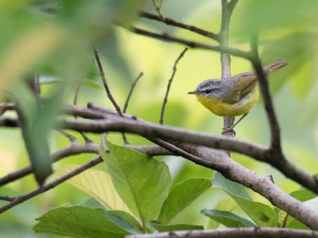 Spring Birding Around Sangla