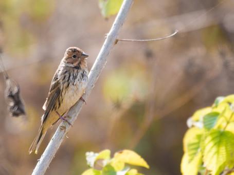 Winter Birding along the Bagmati