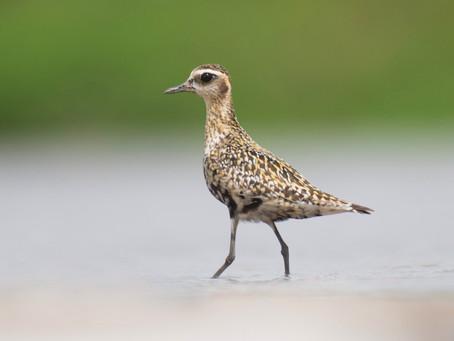 Birding in Manohara