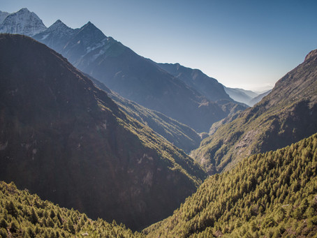 Birding in the Everest Region: Below the Treeline