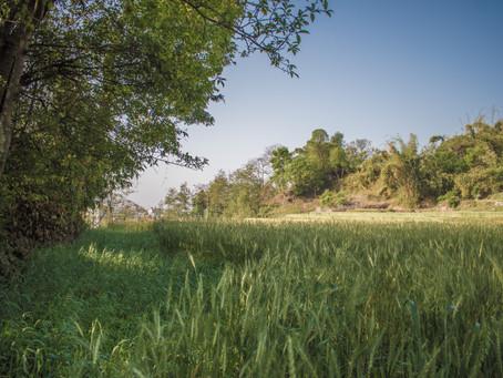 More Backyard Birding in Sangla