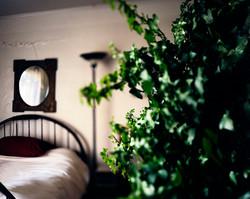 Natalie's Green Ivy