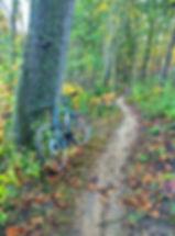 MTB Trail.jpg