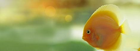 peixe magistral-vet.jpg