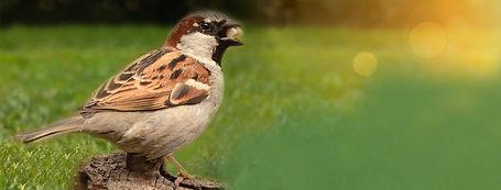 aves magistral-vet.jpg