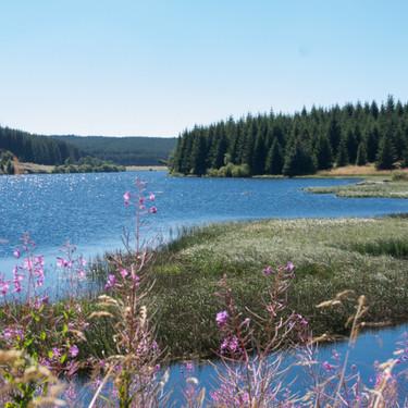 La Margeride - Lac de Charpal