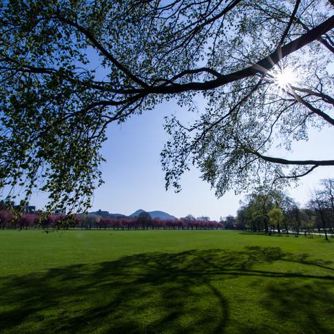 Meadows Park - April 2019 - SIGN.jpg