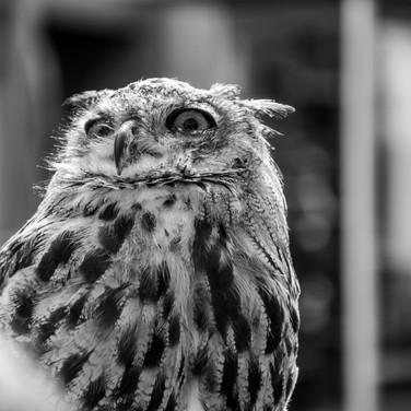 Hazel the owl - sign (4).jpg