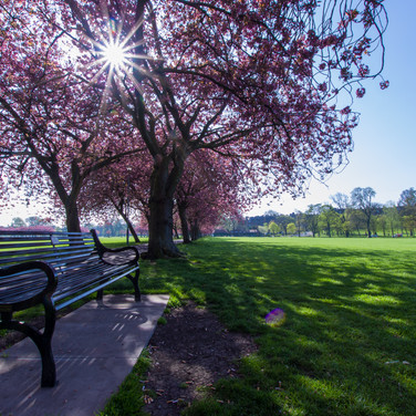 Meadows Park - April 2019 - SIGN-5.jpg