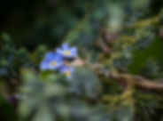 fleurs_et_gouttes_d'eau_-_lundi_7_mai_20