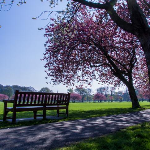Meadows Park - April 2019 - SIGN-4.jpg