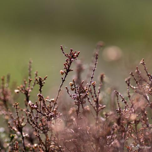 Bruyère - Craigellachie National Nature Reserve