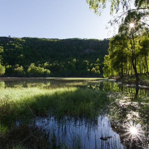 Craigellachie National Nature Reserve -