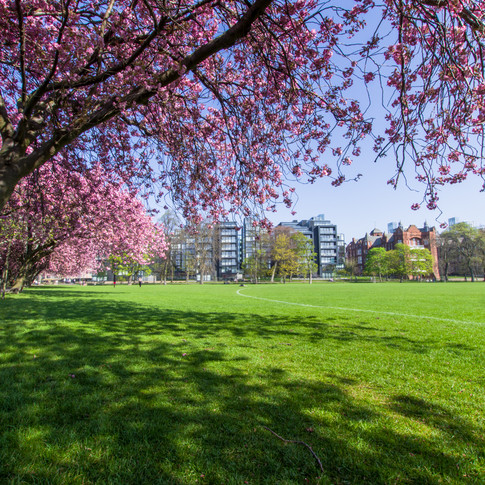 Meadows Park - April 2019 - SIGN-7.jpg