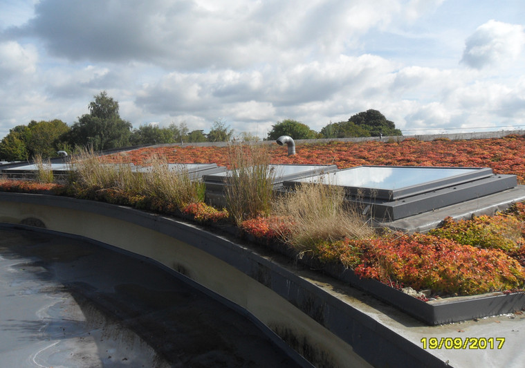 Green sedum roof with skylights for a school