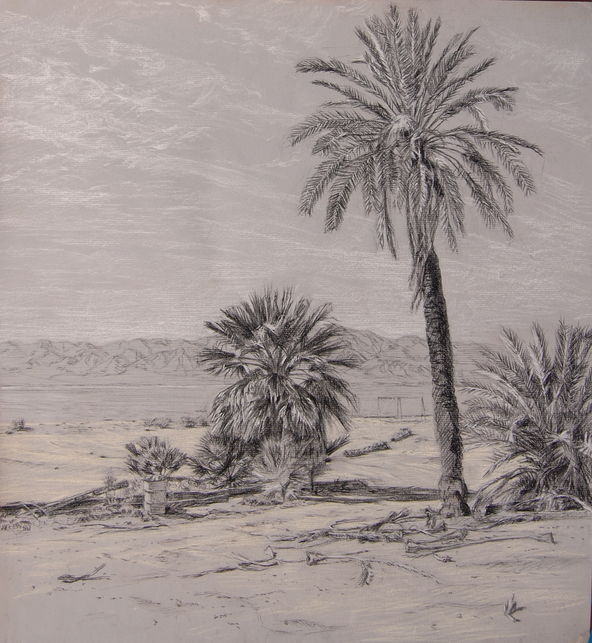 palm-drawing1