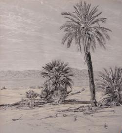 North Shore Palm Drawing