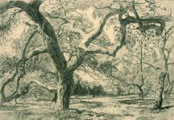toro park oak