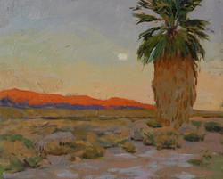 Moonrise Palm, Salton Sea