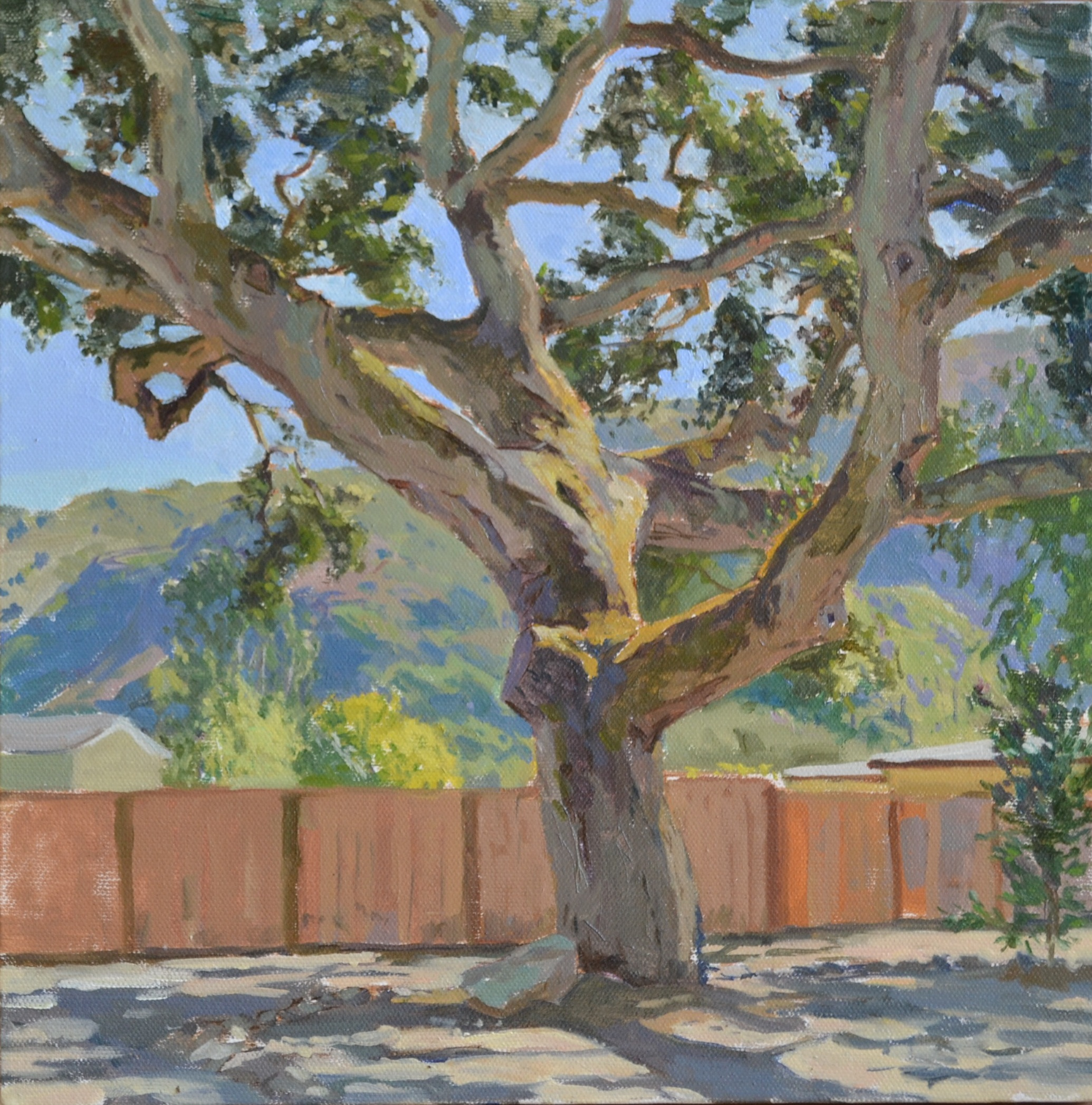 Carmel Valley Oak