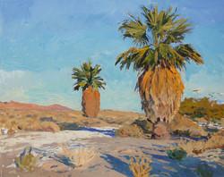 State Park Palms at Sunset