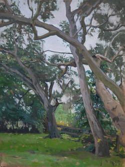 San Benancio trees