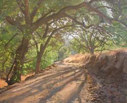Walnut Tree Path