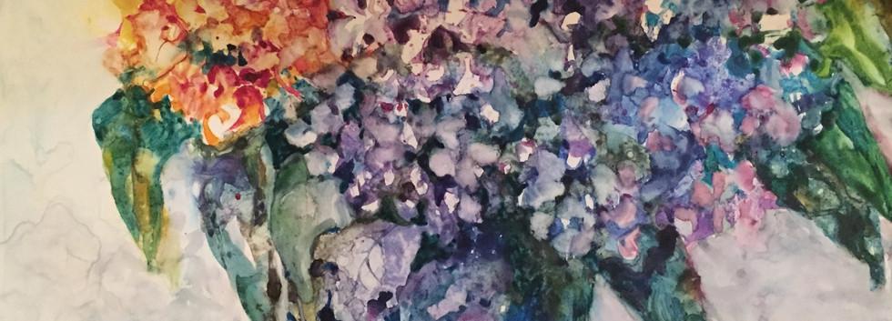 Rainbow Hydrangea