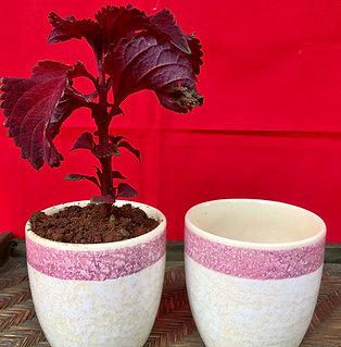 Christmas Royal Marble With Pink Border Planter