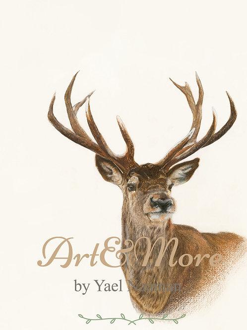 Small new Deer art print  הדפס אמנות קטן אייל חדש