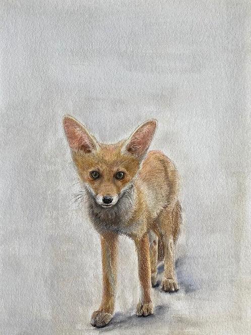Original drawing Young fox   שועל צעיר ציור מקור