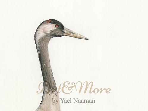 Original Drawing  Common Crane, portrait