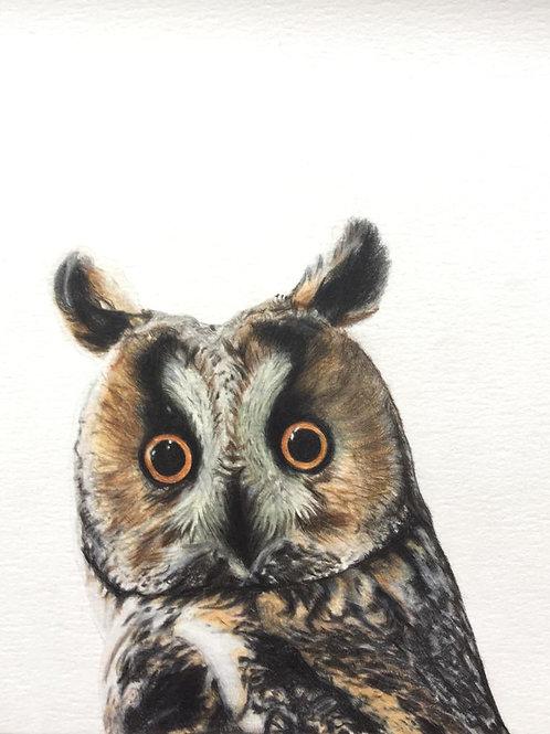 Small Long Eared Owl Art Print