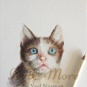 חתולה (1) copy.jpg