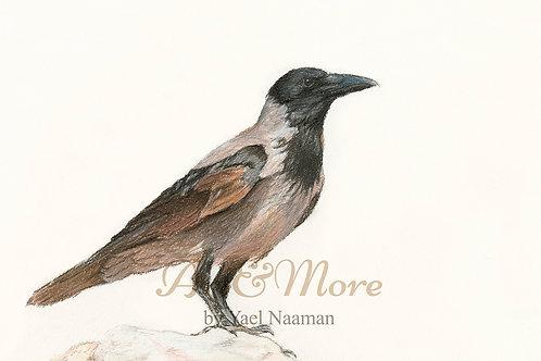 Original Drawing - Hooded Crow