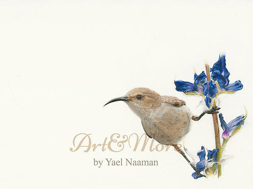 Small Palestine sunbird female, Art Print