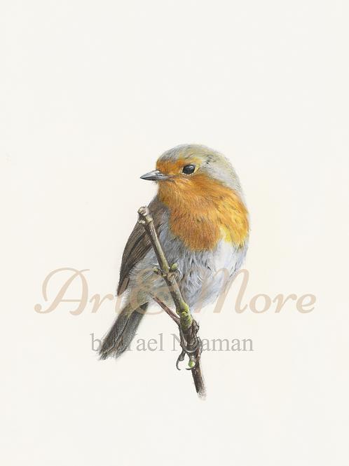 Large European Robin  Art Print