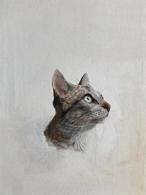 Original drawing cat portrait דיוקן חתול ציור מקור