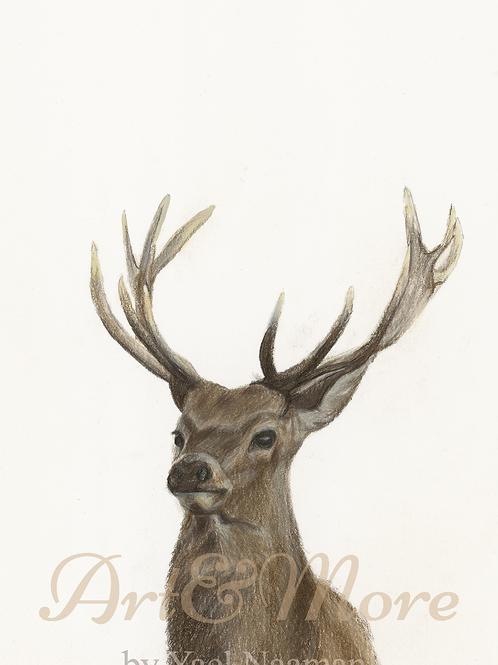 Large Deer Art Print
