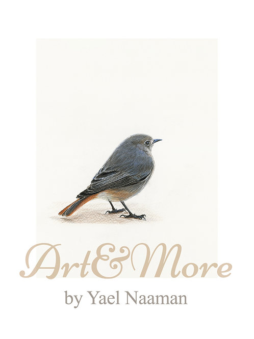 Original Drawing Black Redstart