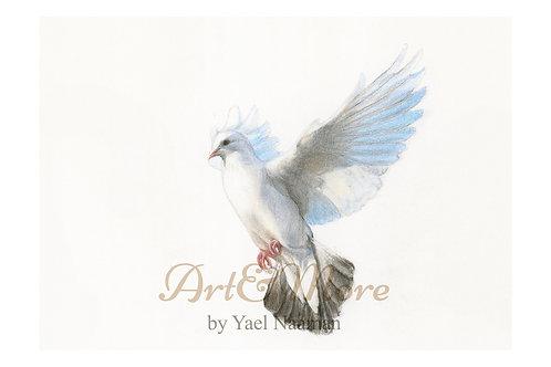 Original Drawing White Dove