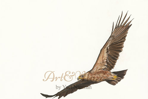 Original Drawing Lesser Spotted Eagle