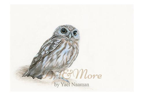 Large Little owl Art Print