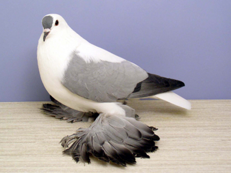 Are Pigeons Like Children? by Richard Gray
