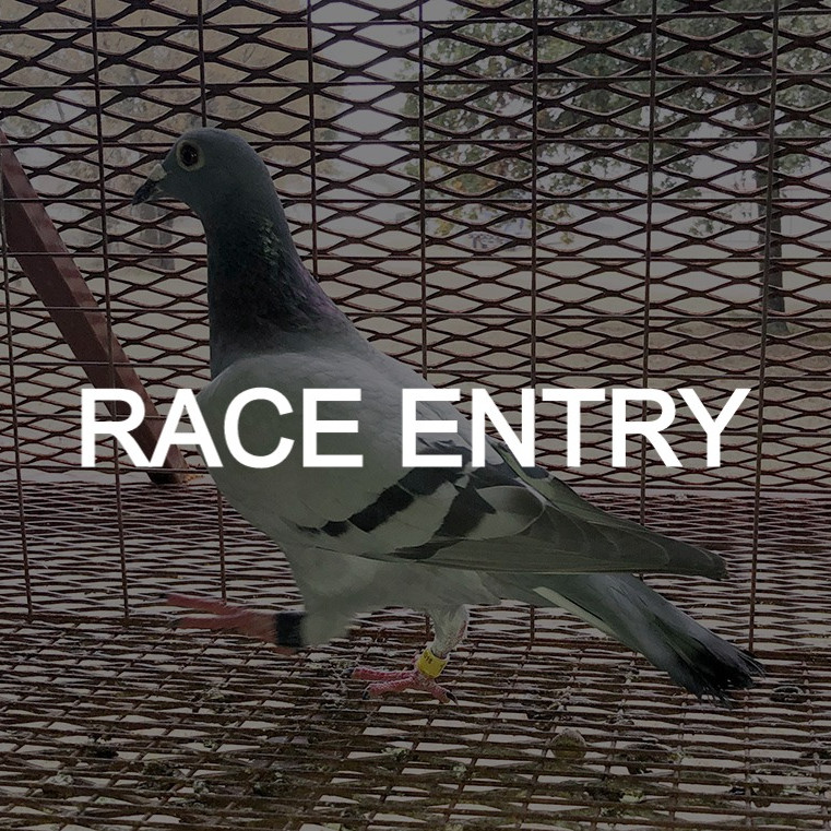 RACE ENTRY | $250 Entry
