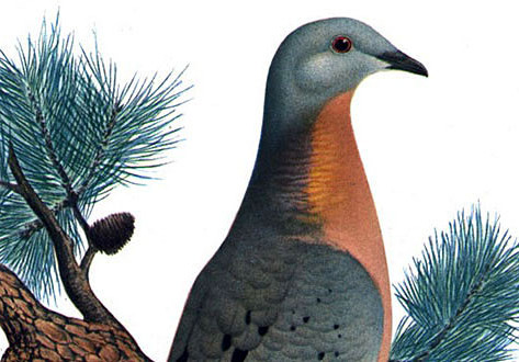 Why the passenger pigeon went extinct and whether it can and should be brought back.