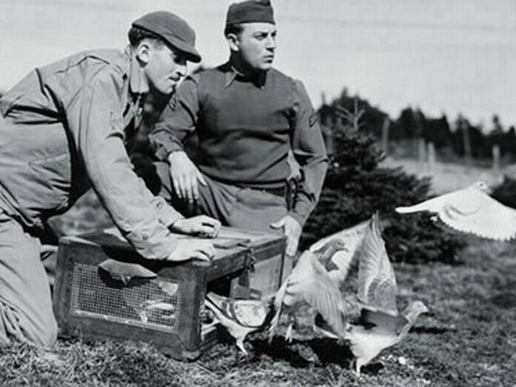 Pigeons of War by Joe Razes