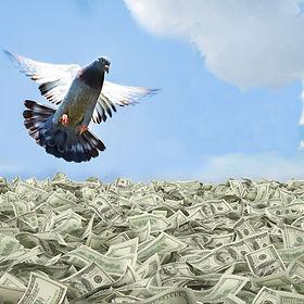 pigeon%20over%20money%20%202_edited.jpg