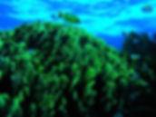 Corals, Coastal Ecosystems Program, Centro Ecologico Akumal